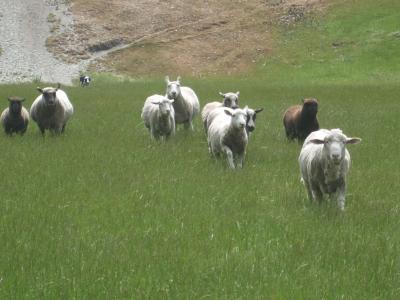 子連れでニュージーランド旅行  7-ウォルターピーク