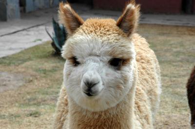 ペルー~インカ帝国の栄華の夢跡を訪ねる~ ③クスコからプーノへ