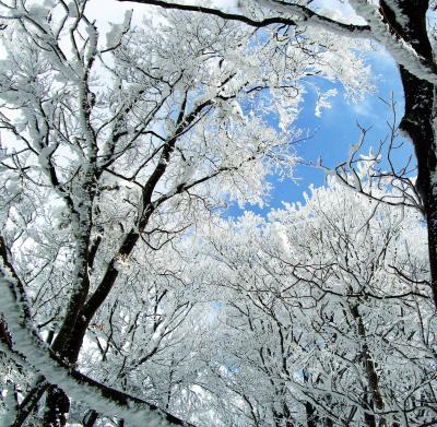 樹氷華を求めて 綿向山