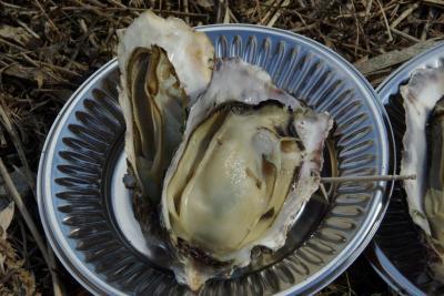 播磨灘を眺めながら牡蠣を食す