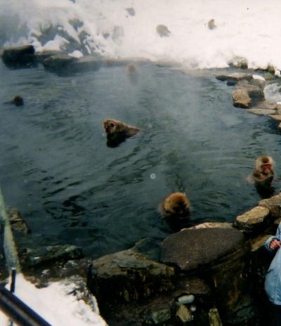 4-3:長野~お猿の温泉!「お猿さん♪湯加減どうですか?」