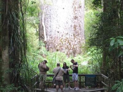 ■21:NZレンタカー自由旅行:2月2日 ワイポーア森林保護区(550km)