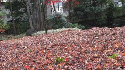 武蔵野の紅葉を歩く