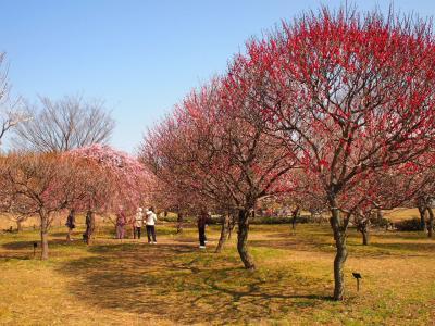 越谷梅林公園2011