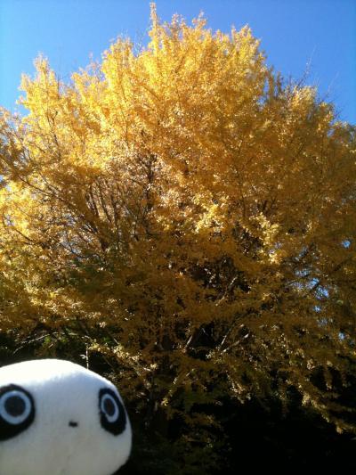 秋の鎌倉と江ノ島水族館の海月クリスマスツリー