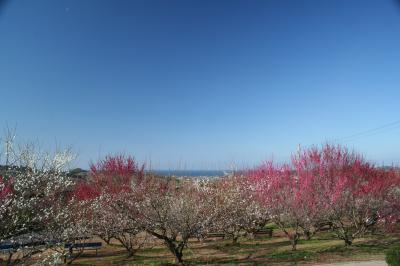 日本一の梅の里を訪ねて