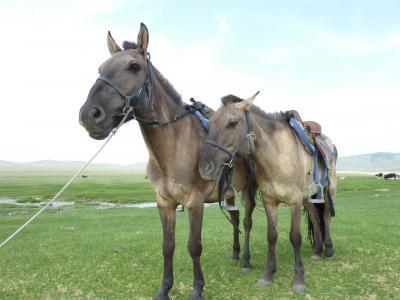 ゴビ砂漠とエレステ・モンゴルの旅