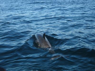 家族で海外 ハワイ② イルカと泳ぐ