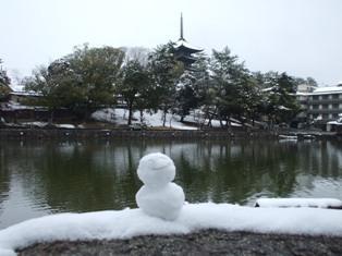 大雪なのであえて奈良公園に行ってみました
