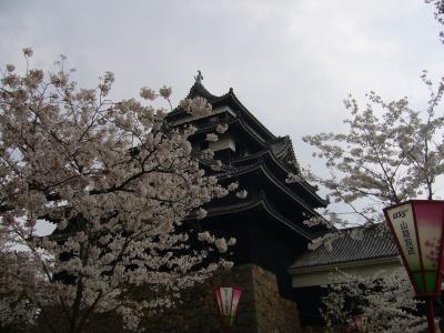 松江城でお花見