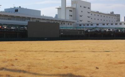 日産野球部の聖地、市沢。