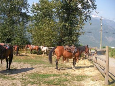 ☆ウィスラー☆旅行 ~ウィスラーで乗馬体験~