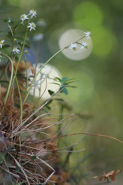 森野旧薬園 2011