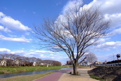 元荒川2011-いつもとちがう春