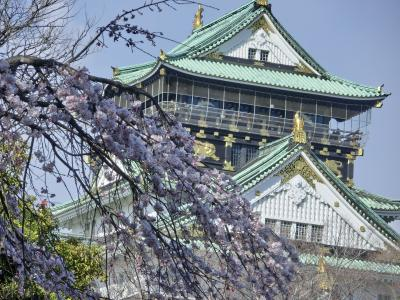 ほら!春はそこまで*≧∀≦*♪ 大阪城より愛?をこめて