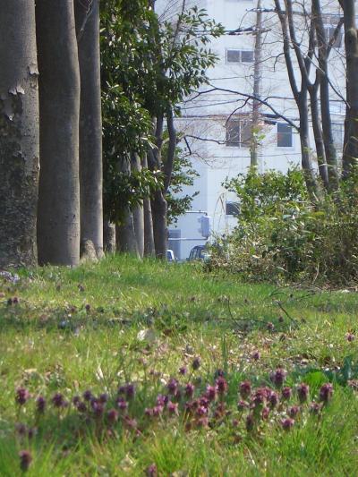 歩こう会100回記念で久喜・菖蒲公園に・・