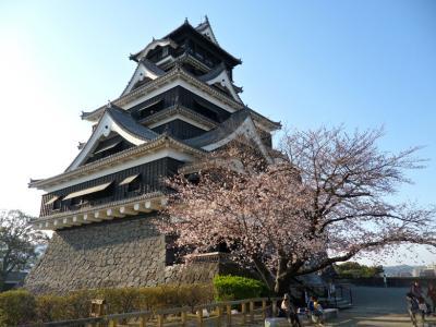 桜満開熊本城