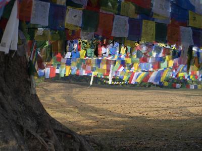 16. インド・ネパール 懐かし旅  ネパール ルンビニ