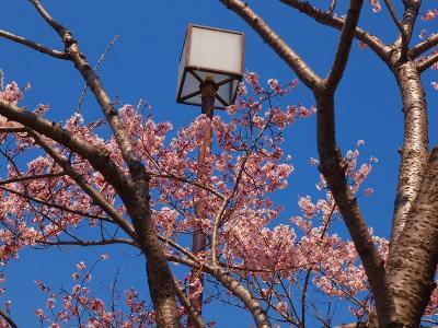 2011 足立 都市農業公園 春  上