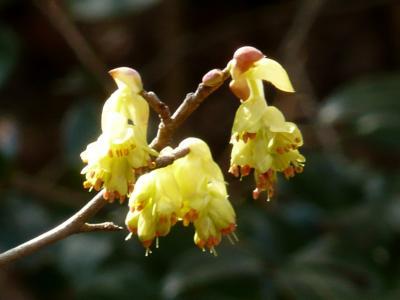早春の花めぐり⑤ 岡山県自然保護センター