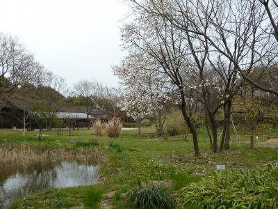 「 城南島 ~ 野鳥公園  春の自然観察 2011 」