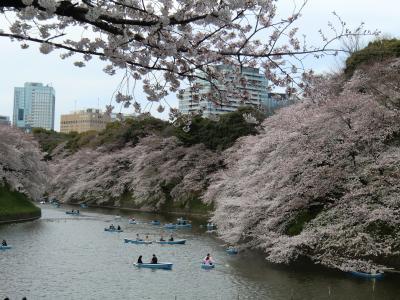2011年4月 ほぼ満開の桜(王子、九段下)