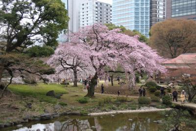 都心のお花見:小石川後楽園・千鳥ヶ淵
