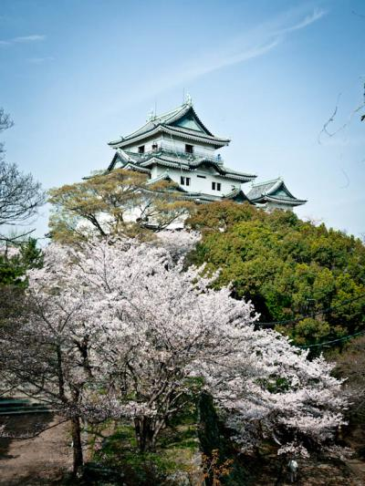 2011桜 in 和歌山