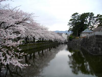 2011 小田原の城と桜に酔いしれて~♪ Odawara-Schloss und die Kirschblueten~♪
