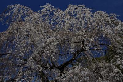 京都御所の一般公開と府立植物園へ