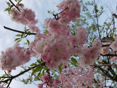 !!!花見!!! しながわ運河まつり2011 ♪天王洲アイルへふらり旅♪