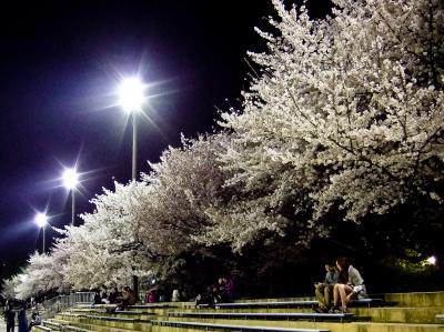 鶴舞公園のお花見2011