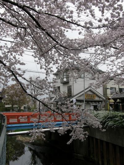 早朝ウォーキングで観桜・・・<その3> 愛宕神社・中落堀川沿いのさくら