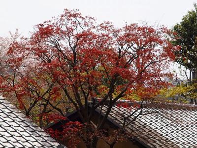 2011 春 林芙美子記念館 草花