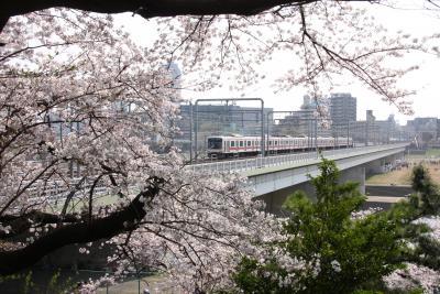東京のお花見散歩:多摩川台公園~桜坂~御嶽神社