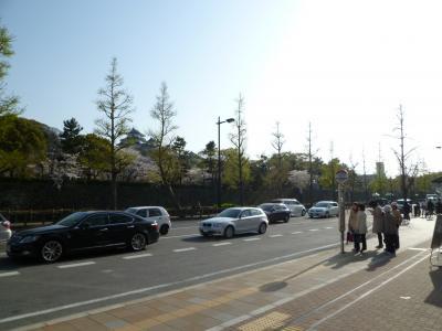 さくら満開の和歌山城