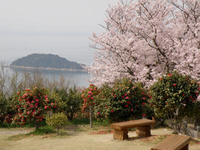 万葉の岬の桜と椿