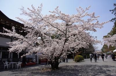 春爛漫の京都を駆け足で巡る ~天龍寺・龍安寺・仁和寺・二条城~