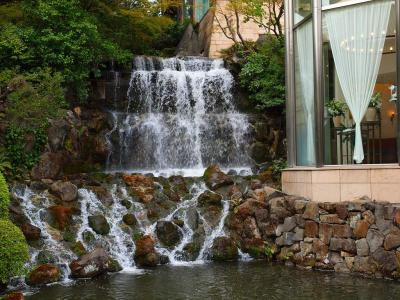 神田川の桜を愛でる 最終 椿山荘