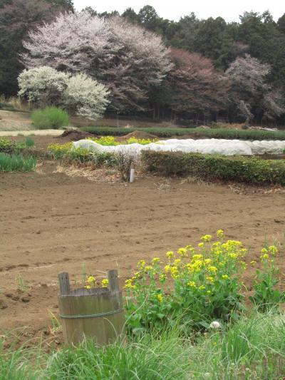 曇時々晴の花見時(1)桜のある春色とりどりの田舎道