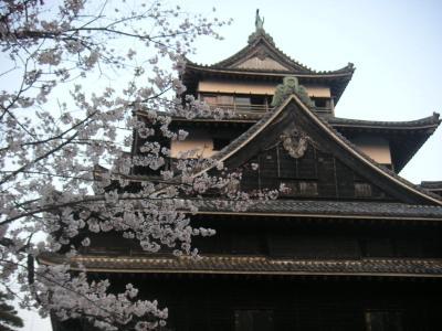 松江城の桜 八分咲き