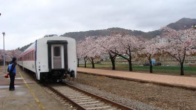 鎮海の桜観光・・・再び慶和駅へ、通過する列車の撮影。