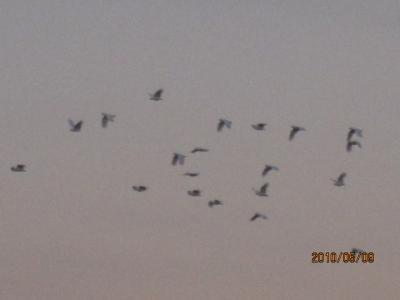 『燃える大地』<ゴンドワナの大陸を旅して>(185)キャンベラの夜明け「霧・湖・鳥」。