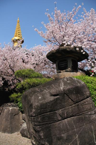 2011大阪の春-2(一心寺)