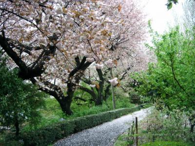 花と緑の振興センターで桜と綺麗なお花