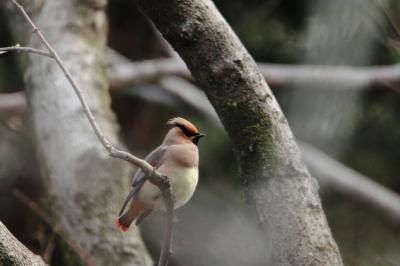 秋ケ瀬公園の鳥