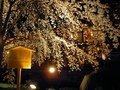 祇園白川 夜桜ライトアップ