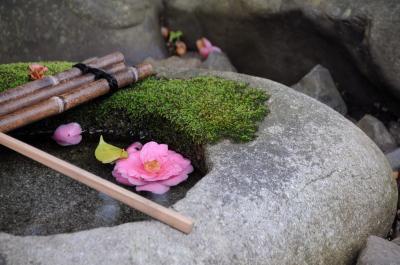 春の京都へ ~霊鑑寺の椿と醍醐寺の桜~