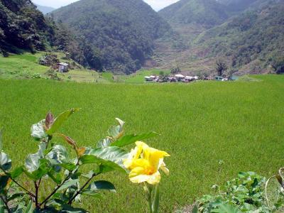 バナウエ9: バンガ・アン 「ライス・テラス」 & 「小さな小さな村」