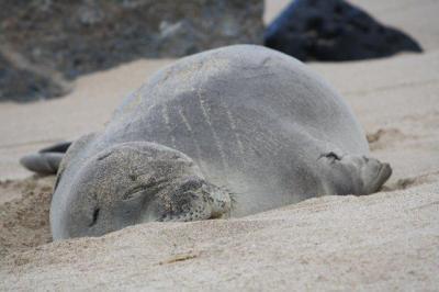 オアフ島10日間自然満喫旅行